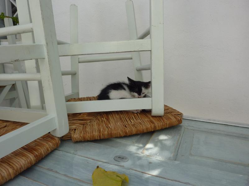 Chat dormant paisiblement à Paros