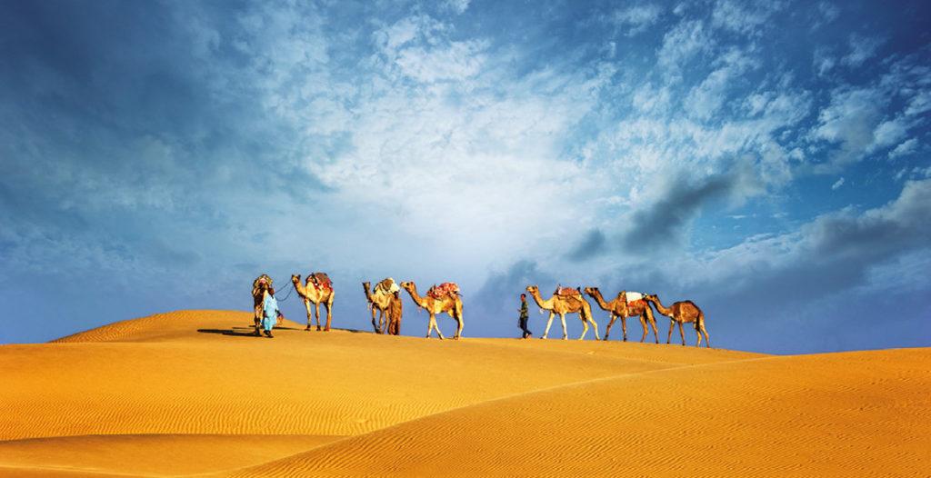 promenade en chameau dans le désert de Dubai