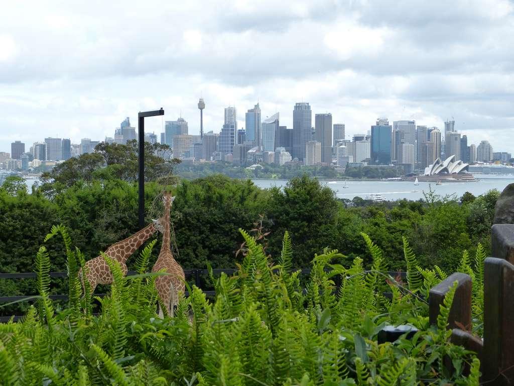 Que faire à Sydney ? Visiter le zoo de Taronga